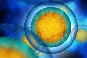 SpenglerFox Lone Roervig Global Head Life Sciences Search Practice